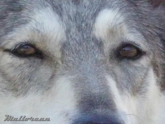 ojos-de-thelma