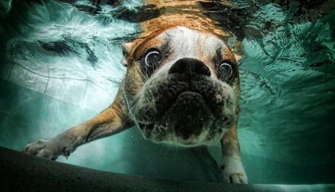 Problemas de las mascotas en el verano