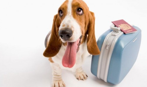 viajando con perro