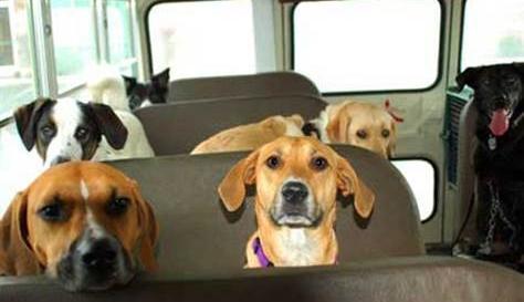 Perros viajando en autobus
