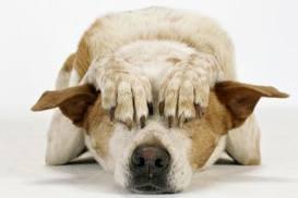 Perfil del Perro Educado y del Perro sin Educar