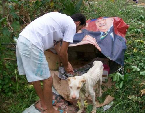 Perro abandonado -1