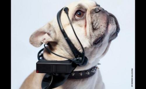 Perro con dispositivo No mas ladridos