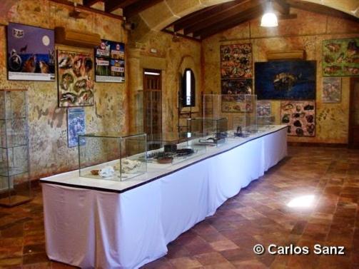 foto-1-copy-carlos-sanz