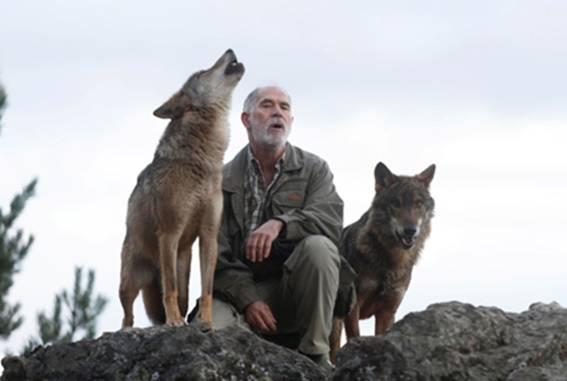"""Carlos Sanz aullando con """"Dakota"""" y """"Atila"""", en el Centro del Lobo Ibérico de Castilla y León"""